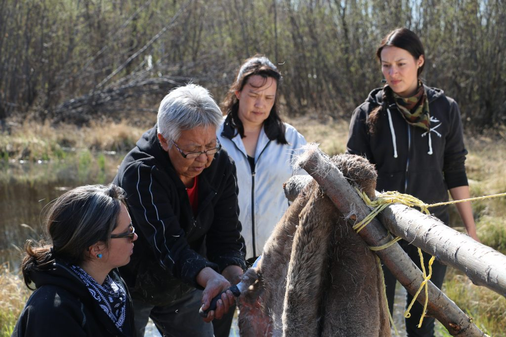 A Dene Nahjo workshop on moose hide tanning.
