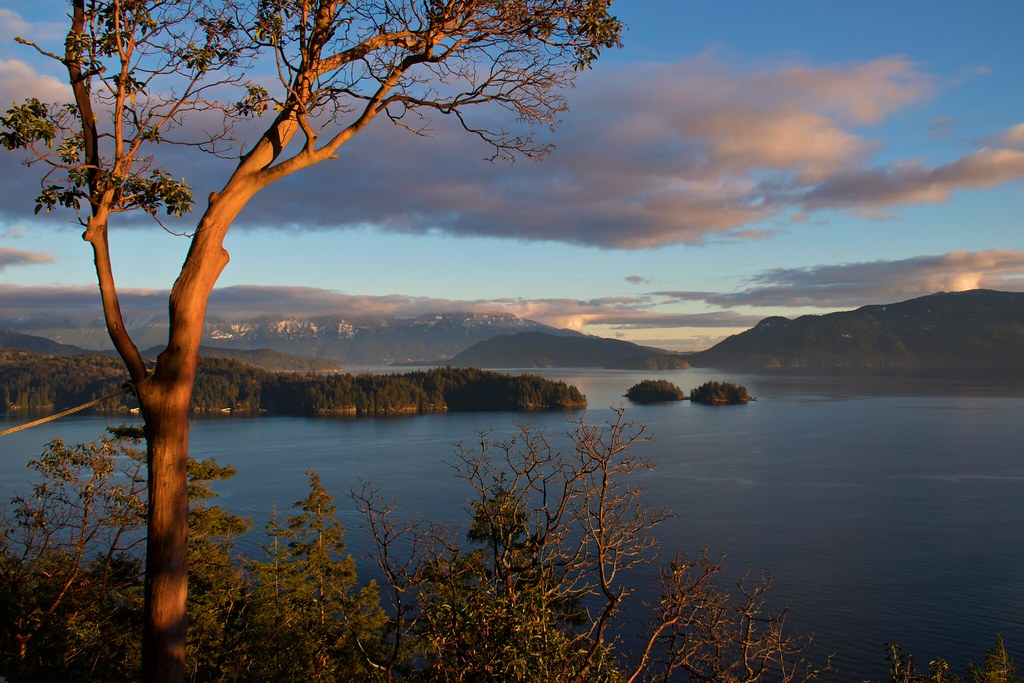 A landscape photo of a body of water dotted with islands at sunset. In the foreground: an arbutus tree.