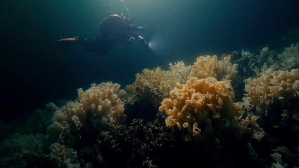 A diver explores a glass sea sponge reef underwater.